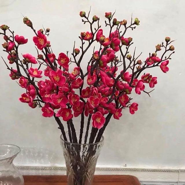 Những loài hoa có màu sắc tươi tắn là lựa chọn hàng đầu cho bạn khi trang trí không gian vào dịp Tết