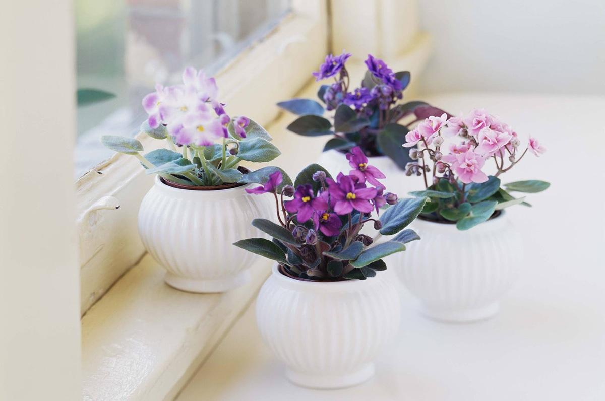 Chỉ nên chọn chậu hoa nhỏ xinh để tránh chiếm diện tích