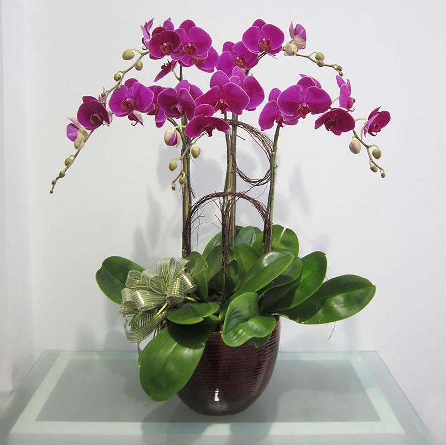 Lan vốn là giống hoa được khá nhiều người yêu thích