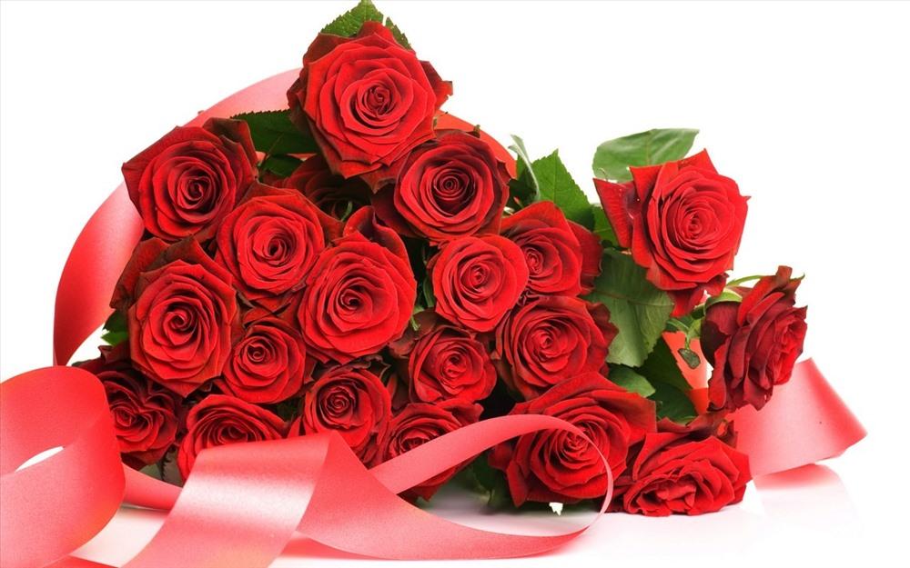 Hoa hồng là loài hoa nổi tiếng với vẻ đẹp dịu dàng, đồng thời cũng là biểu tượng của tình yêu, sự trân trọng