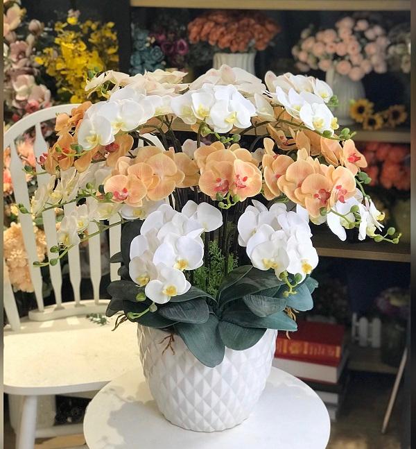 Ý nghĩa của hoa lan sẽ tùy vào đặc điểm, màu sắc của hoa