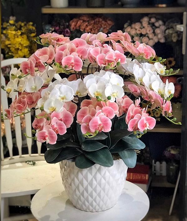 Hoa lan còn được xem là biểu tượng của tình yêu đẹp, nhẹ nhàng, chung thủy, gắn bó keo sơn