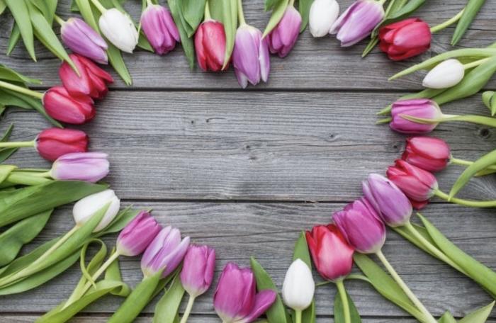Hoa tulip mang nhiều ý nghĩa đặc trưng