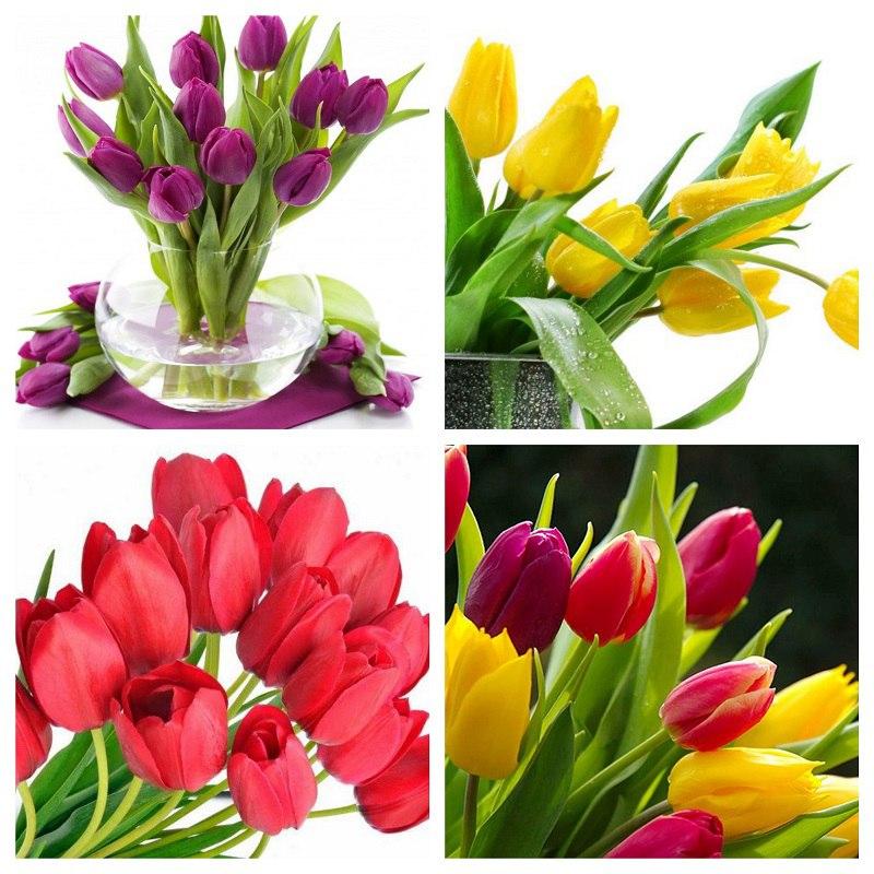 Mỗi màu sắc của hoa đại diện cho nhiều ý nghĩa tích cực khác nhau