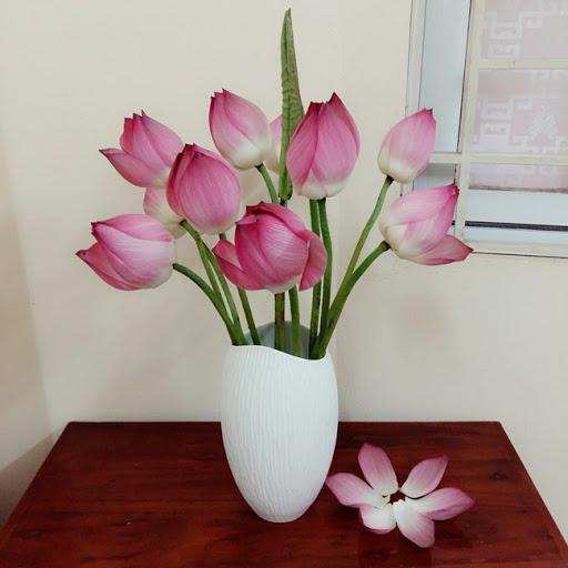Ý nghĩa của hoa sen theo từng màu sắc