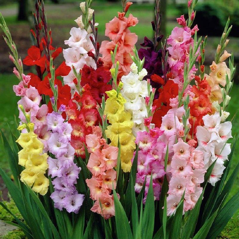 Cách cắm hoa lay ơn 10 bông