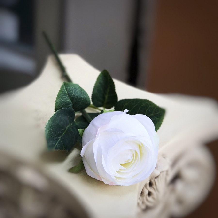 Hoa hồng trắng có ý nghĩa gì